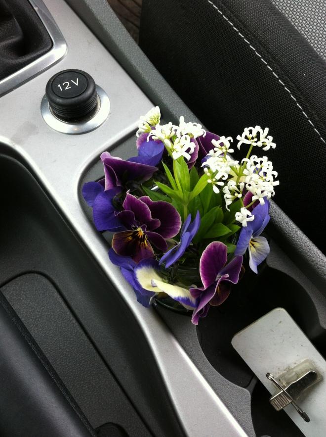 Road trip violets